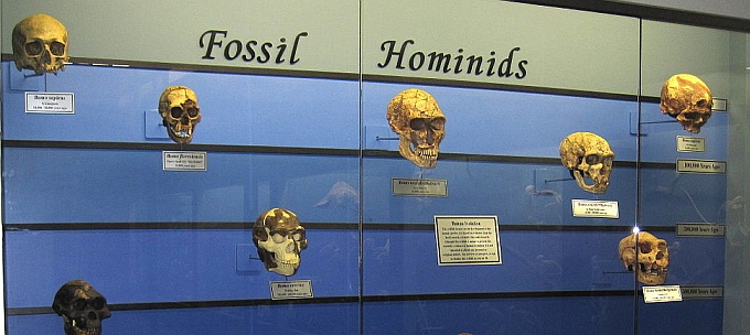 Fossile Hominiden